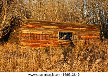 Old abandoned log cabin at sunrise in fall.  Roof has collapsed in.  Dry grass and weds in front and aspen trees behind - stock photo