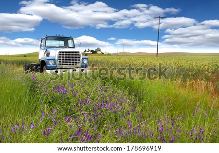 Old abandoned truck in the middle of wheat fields - stock photo