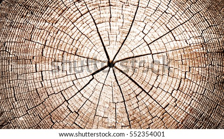 Old, aged and cracked closeup of warm flat wood texture. Annual rings of tree stump cut decomposing outside.
