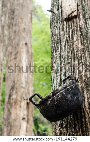 Old and black aluminum pot hung on big tree. ( I took this shot from hill tribe village, northern Thailand.) - stock photo