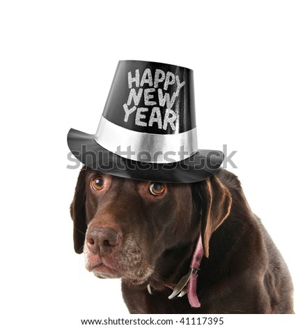 Old and sad labrador retriever wearing a happy new year hat. - stock photo