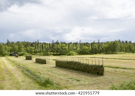 Old and traditional hay poles filled with fresh hay and an old barn on the background. Focus point is on the front poles. Image taken on a cloudy summer day. - stock photo