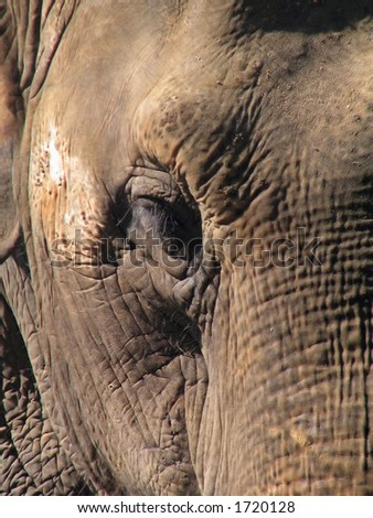 old and wrinkled elephant close-up photo