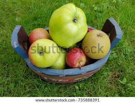 Old apple, varieties