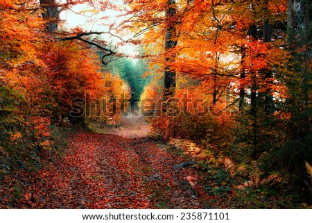 Old autumn forest - stock photo