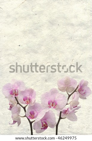 old background with orchid flower