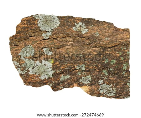 old bark with lichen isolated on white background and texture - stock photo