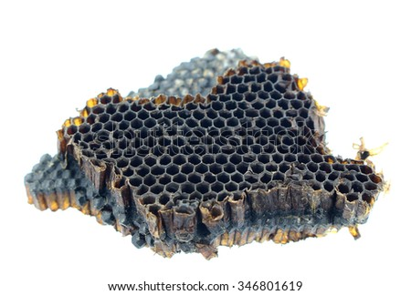 old bee nest on white background - stock photo