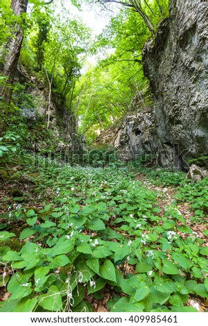 Old beech forest with hiking trail in the mountains - stock photo