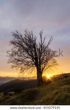 Old beech tree with bare branches. Setting sun in the mountains. Autumn landscape in the countryside - stock photo