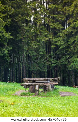 Old bench in the middle of the forest