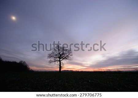old big tree on color background with blue sky - stock photo