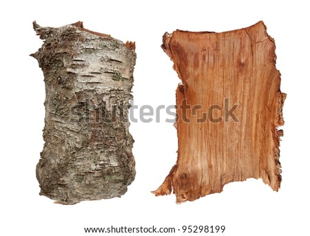 Old birch tree bark texture, very detailed, inner and outer side. Isolated on white - stock photo