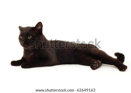 old black cat isolated on white background
