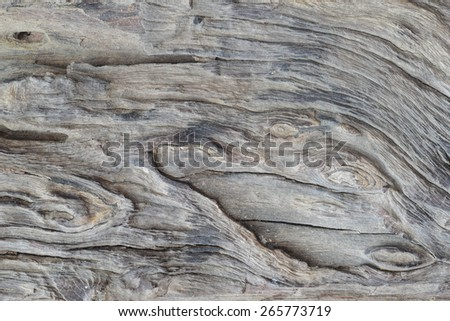 old black dead tree nature pattern  - stock photo