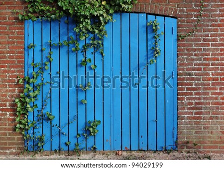 Old blue garage door overgrown with ivy. - stock photo