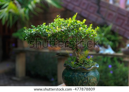 old bonsai tree in a ceramic pot