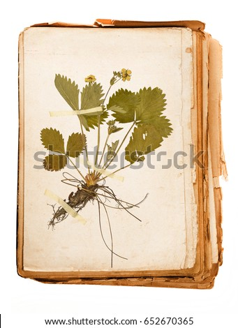 Herbarium stock images royalty free images vectors shutterstock - Model herbarium ...