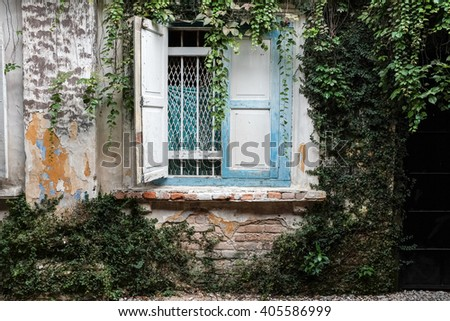 Old brick wall background covered with bush plant  - stock photo