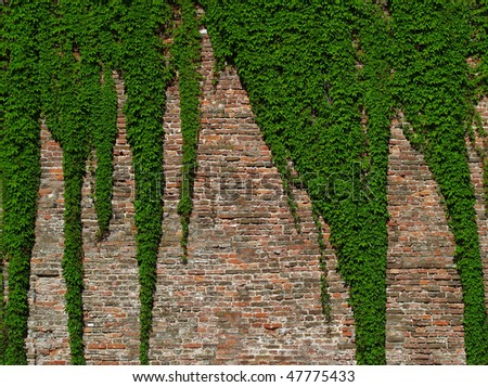 old brick wall covered with vines - stock photo