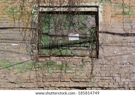 old brick wall with a window covered by ivy horizontal - stock photo