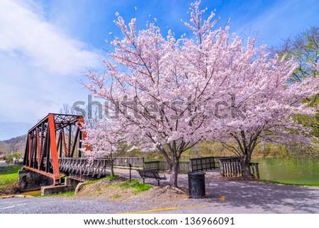 Old bridge with cherry blossom trees - stock photo