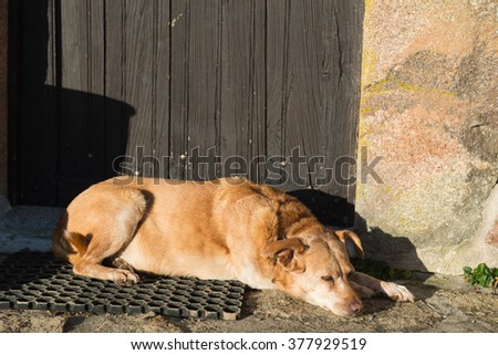Old brown cross-breed dog laying outdoor - stock photo