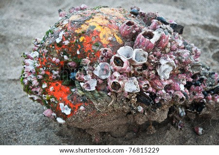 Old buoy covered with barnacles washed away on the beach