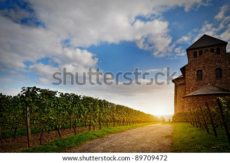 old castle and a vineyard  lighted by the sun
