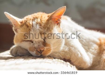 old cat sleeping on floor - stock photo