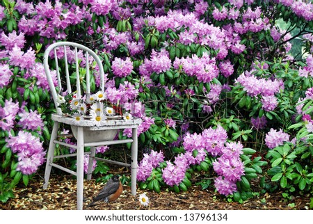 old chair in the rhododendrons - stock photo