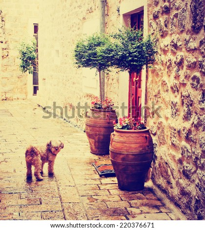old charming streets with small dog - stock photo