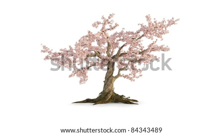old cherry tree isolated on white - stock photo
