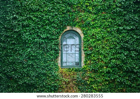 Old church window surrounded by creeping ivy plants - stock photo