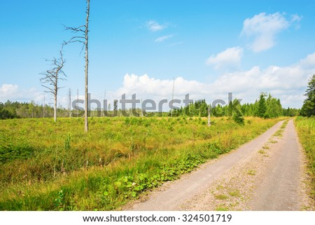 Old clearcutting in the forest by the road - stock photo