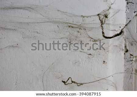 old cobwebs on the wall as background  - stock photo