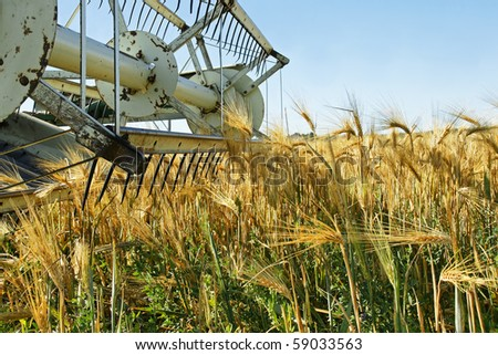 Old combine harvester stopped in a beautiful ripe golden barley field crop wanting to be harvested. - stock photo