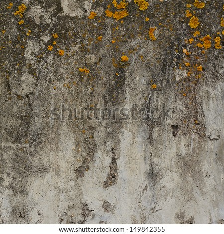 Old concrete wall covered with yellow lichen as abstract background texture - stock photo