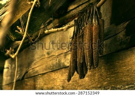 old corn clip - stock photo