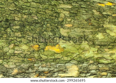 Old cracked mossy tree bark texture closeup - stock photo