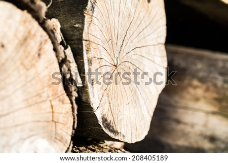 Old cracked tree stump wood texture abstract grunge background - stock photo