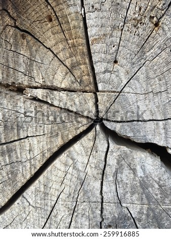 Old crackled logs wooden background texture - stock photo