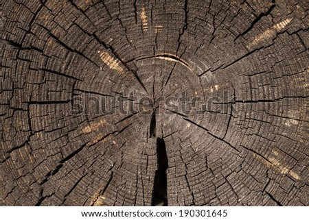 old cut logs. texture wood