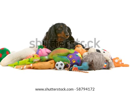 old dachshund sitting on a pile of toys - stock photo
