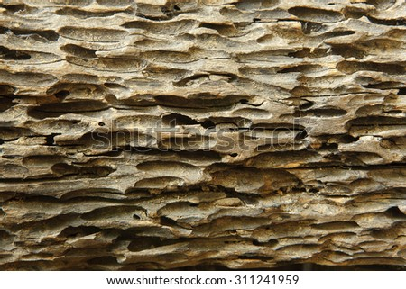 Old damaged wood as a symbol of aging decay or termite insect damage as a tree rotting with holes and tunnels weathered by natural elements in a close up. - stock photo