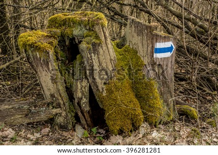 Old dead tree with a hiking sign on it