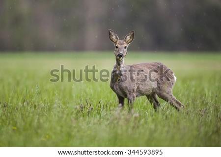 Old deer - stock photo