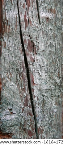 old dilapidated cut tree close-up