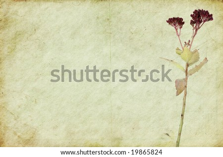 Old dirty paper background with a faded flower. Soft texture. - stock photo