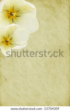 Old dirty paper background with white tulip flowers. Soft detailed texture. - stock photo